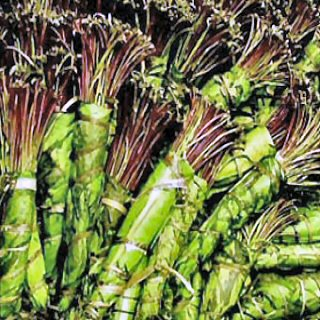 An example of what Khat looks like